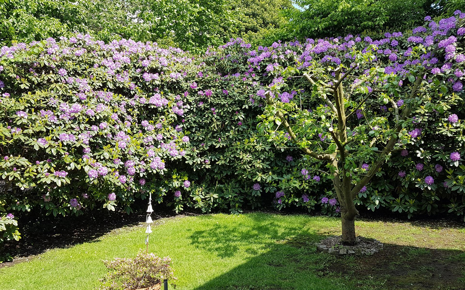 Garten in Rastede
